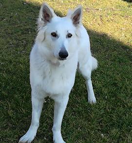 Photo du chien de la maison d'hôtes design et de charme L'Autre Rives à Albi