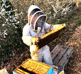 Partenaire du goût n°5: le miel que les hôtes dégustent au petits-déjeuners de la maison d'hôtes design et de charme L'Autre Rives à Albi sont réalisés à Albi par Fiona